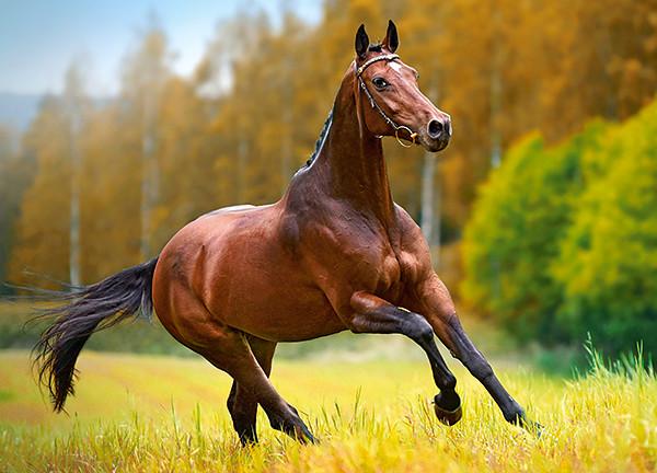 Пазлы Осенний ветер, Лошадь на 180 элементов
