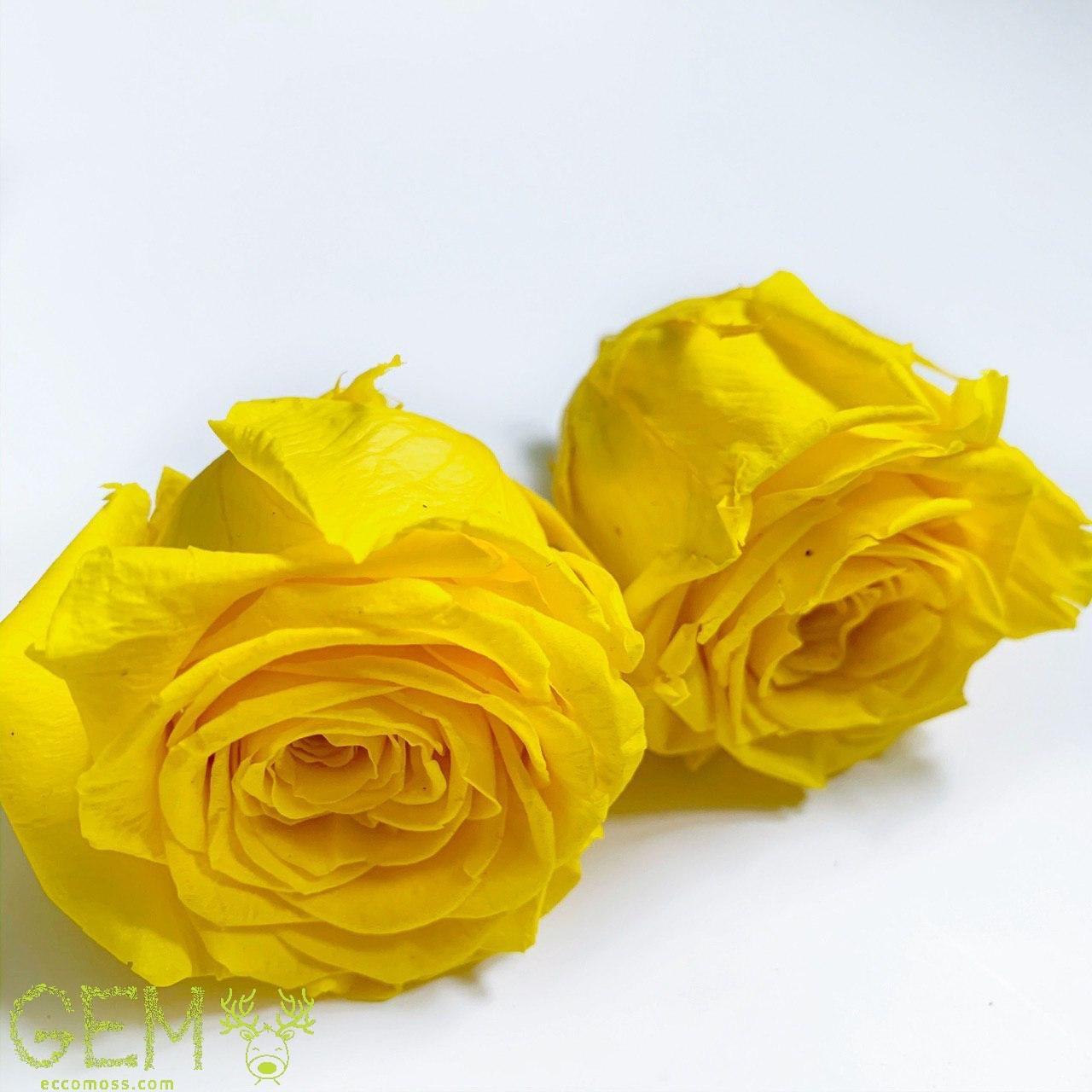 Стабілізована троянда жовта