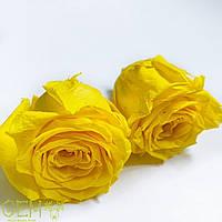 Стабілізована троянда жовта, фото 1