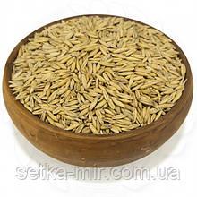 Овес натуральний неочищений 0,25 кг  без ГМО
