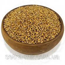 Пшеница органическая 0,25кг.  без ГМО