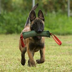 Аксесуари для дресирування собак