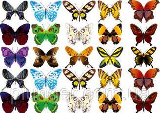 Вафельна картинка для кондитерских виробів, топперів, пряників, капкейків Метелики (лист А4) 9