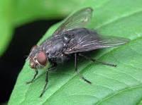 Средство от мух Fly Repellent 100мл.