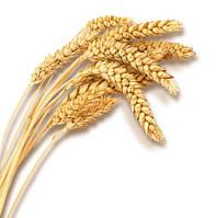 Масло зародышей пшеницы 100% MasloManiya холодного отжима, 3л