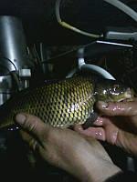 Рыбоводство в УЗВ