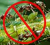 """Средство для уничтожения садовых муравьев и  других вредителей инсектицид """"Муравей НЕТ"""" 120гр (гранула), фото 3"""