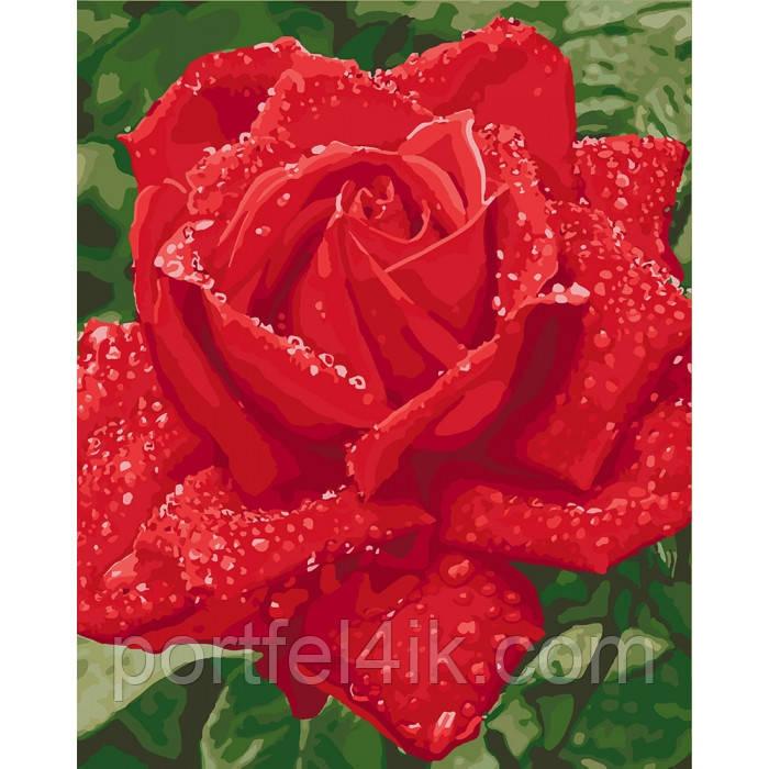 Картина по номерам на холсте Нежность розы (КНО3045) 40х50 ТМ Идейка
