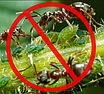 """Средство для уничтожения муравьев и других вредителей порошок """"Муравей НЕТ"""" 30гр, фото 4"""