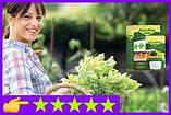 Биоудобрение AgroMax стимулирует рост растений и увеличивает скорость прорастания семян, фото 5