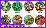 Биоудобрение AgroMax стимулирует рост растений и увеличивает скорость прорастания семян, фото 7