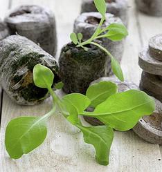 Таблетки торфяные для выращивания рассады