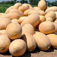 Семена дыни Ребекка F1 Hazera 1 000 шт (Проф упаковка 1 000 шт)