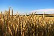 Добриво ЯраМила 12-24-12 / YaraMila NPK 12-24-12 (ФАСОВКА 600 кг Мішок), фото 3