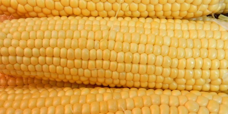 Насіння цукрової кукурудзи Багратіон 50 шт