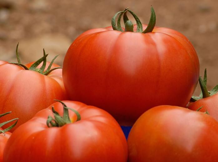 Індетермінантний томат Беллє F1 / Belle, Enza Zaden, 500 насінин