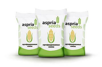 Насіння кукурудзи Aspria Seeds AC33033