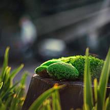 Декоративный стабилизированный мох