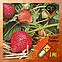 Ароматизатор Xi`an Taima Strawberry| Клубника, фото 2
