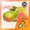 Ароматизатор Capella Sweet Guava| Сладкая Гуава, фото 2