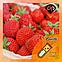Ароматизатор Capella Sweet Strawberry| Сладкая Клубника, фото 2