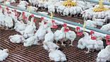 Щелевой пластиковый пол для птичников, решетчатый пластиковый пол для бройлеров 1000*1000 мм, фото 2