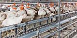 Щелевой пластиковый пол для птичников, решетчатый пластиковый пол для бройлеров 1000*1000 мм, фото 3