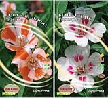 Семена   Годеция Белый Страус 0.3 г  ,Слава Кевельдона 0.3 г ,  Выставка азалий, 0.2 г, фото 2