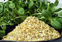Корень петрушки сушеный 3*5*5 1 кг.