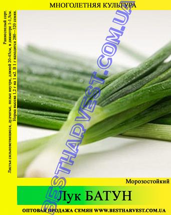 Семена лука «Батун» 0.5 кг, фото 2