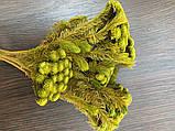 Стабілізована брунія, букет(пучок), фото 4