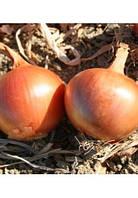 Семена лука Триола  250 000 сем. Agri.