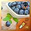 Ароматизатор TPA\TFA Blueberry (Wild)   Черника (Дикая), фото 2