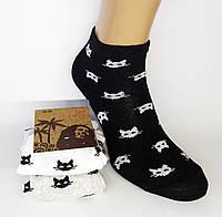 Літні укорочені жіночі шкарпетки. Котики. (Роздріб)., фото 1