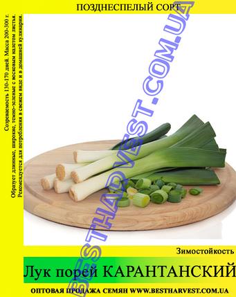 Семена лука «Карантанский» 10 кг (мешок), фото 2