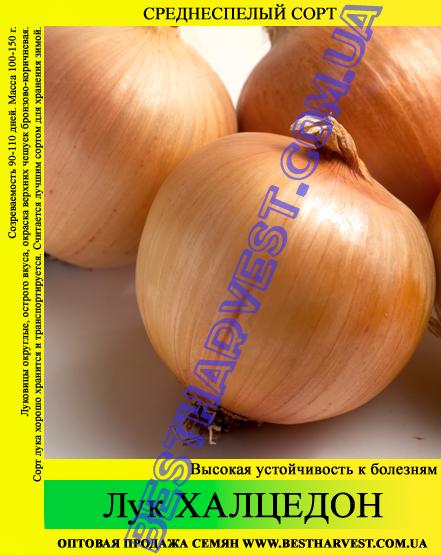 Семена лука «Халцедон» 0.5 кг