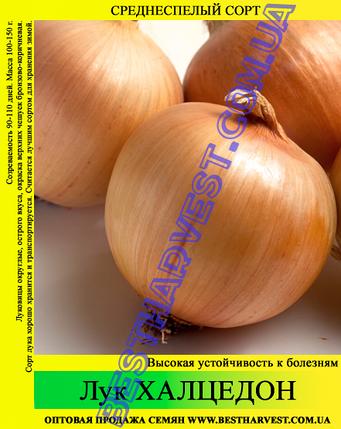 Семена лука «Халцедон» 10 кг (мешок), фото 2