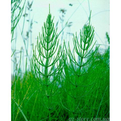 Хвоща натуральный гидролат от GZ 100 мл - ополаскивай волосы травами!