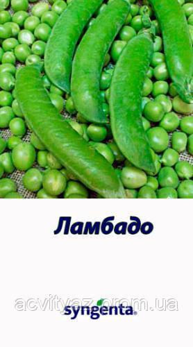 Насіння гороху ЛАМБАДО , 200 000 насінин