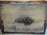 Сушь (рамка Дадан 435х300) отстроенная ячейка(пчела-трутень)