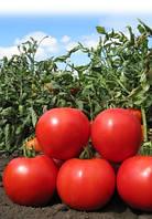Семена томата Лапилло F1 10 000 сем. Agri.