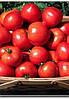 Семена томата Орландо F1 10 000 сем. Agri.