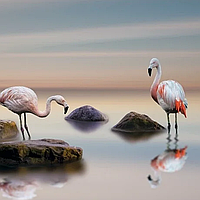 Фотообои ПРЕСТИЖ №65 природа фламинго размер 272смХ196см