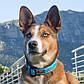 Ошейник для собак,Fancy dress Красные косточки, SIDE RELEASE COLLAR (Рогз) M: 26-40 см, фото 2