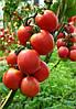 Семена томата Джайро F1 500 сем. Agri.