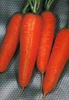 Морковь Шантанэ Ред Кор 500 г. Agri.