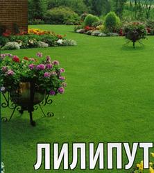 Трава газонная Лилипут семена 300 г