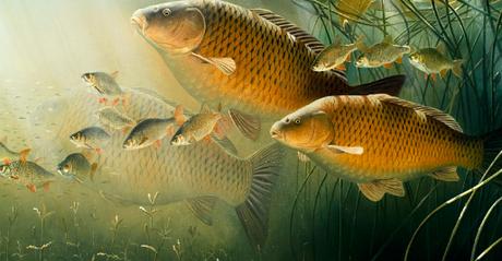 Крючки на мирную рыбу