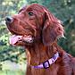 Нейлоновый ошейник для собак, красный Utility Red (Рогз)L: 34-56 см x 20 мм, фото 7