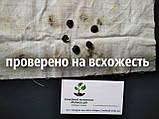 Магнолия кобус семена 10 шт (Magnolia kobus) для саженцев насіння магнолія на саджанці, фото 4